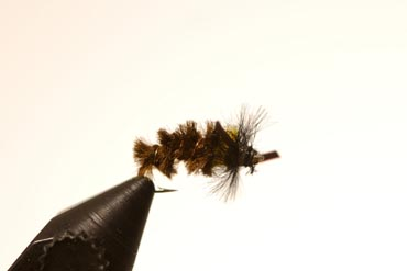 Cased Caddis Larva
